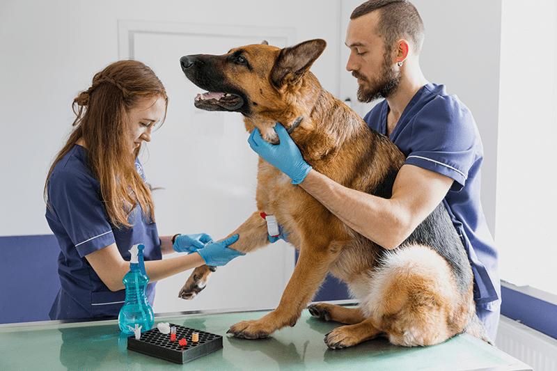 Профессия – ветеринар