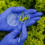 Профессия – биотехнолог